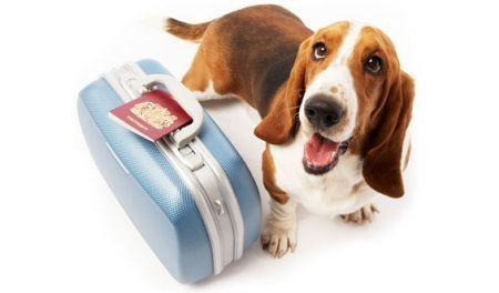 Imagem de férias com cães.jpg