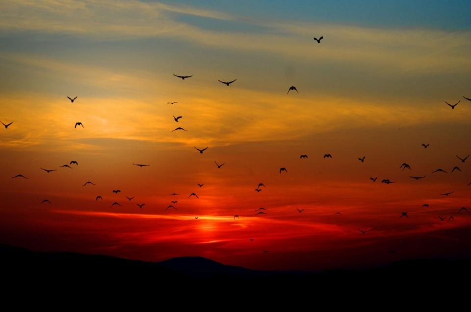 Quero voar....jpg
