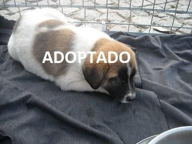 Adopção de Cães.jpg