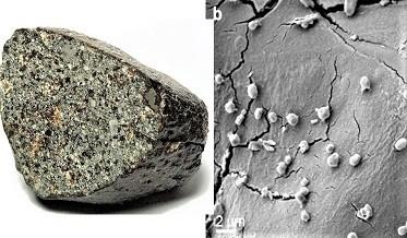 MeteoriteLovingMicrobe.jpg