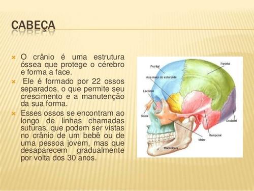 sistema-esqueletico-divisao-do-esqueleto-2-638.jpg