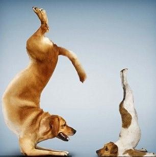ioga_animais.jpg