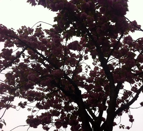 53_A3C_Sonhos Cor de Rosa.JPG