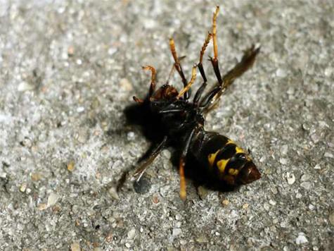 vespa europeia.bmp