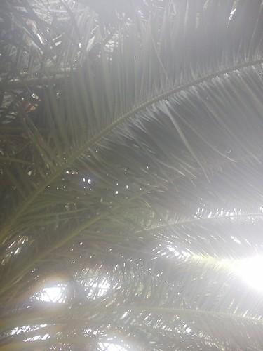 62_A3C_Jardim Verde.jpg
