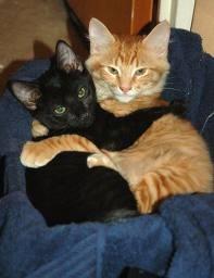 abraço gatos.jpg