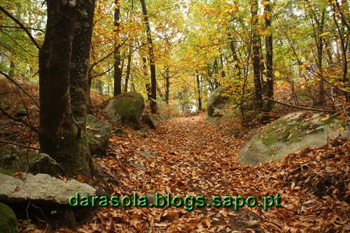 Caminhada_Micologica_15.JPG