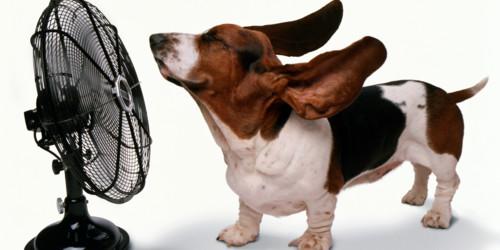 cão e ventoinha.jpg