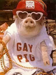porco gay.jpg