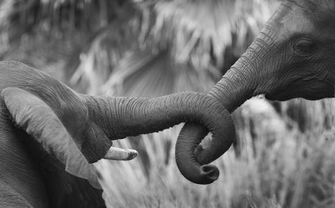 elefantes.png