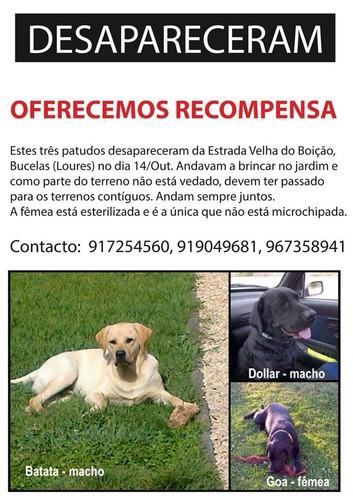 Missing dogs.jpg