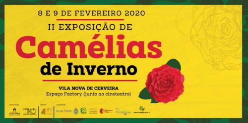 Exposição Camélias - Vila Nova Cerveira - 2020