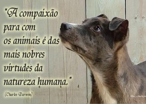 compaixao-pelos-animais1.jpg