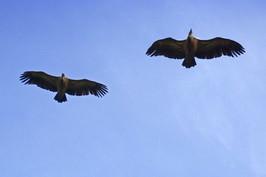 abutres.jpg