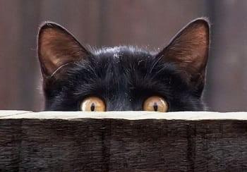 примета-черная-кошка.jpg