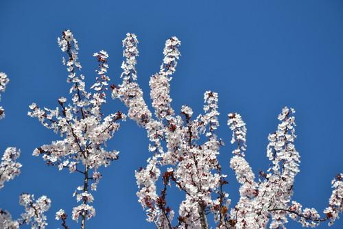 Árvore florida.JPG