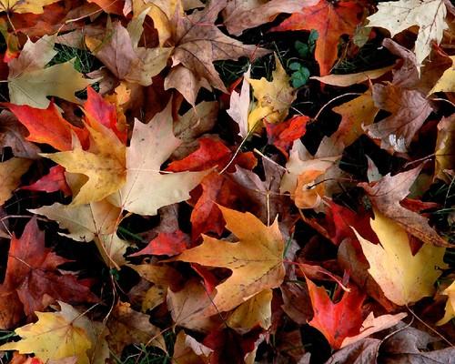 folhas-de-outono-_5334_1280x1024.jpg