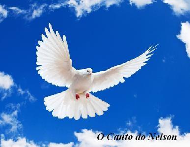 Pomba da paz e da saude