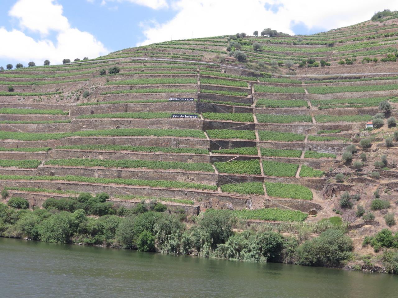 A mítica vinha Vale do Inferno da Quinta de la Rosa