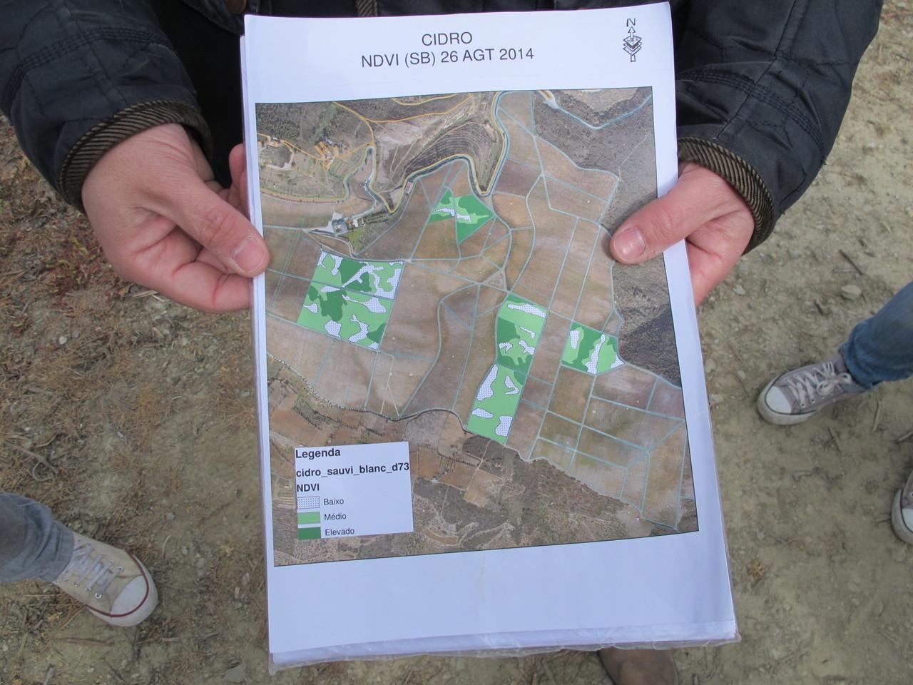 Mapa de vigor das cepas de Sauvignon Blanc