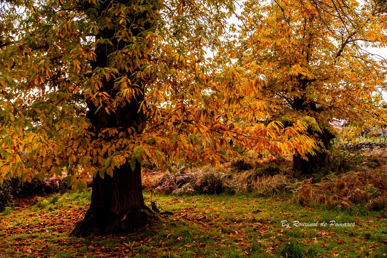 Outono no Fiolhoso (008).JPG