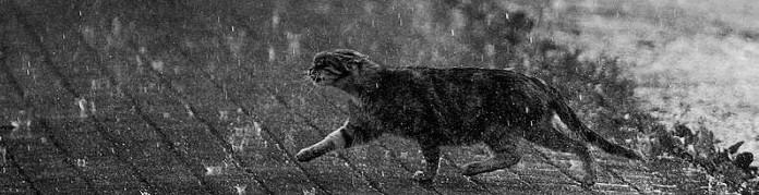raincat.jpg