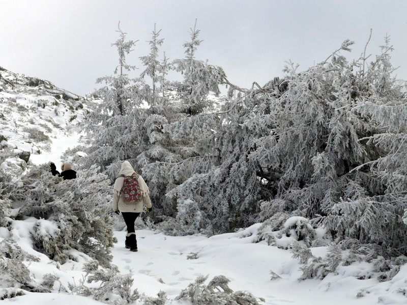 Walking in a winter wonderland, Serra da Estrela,
