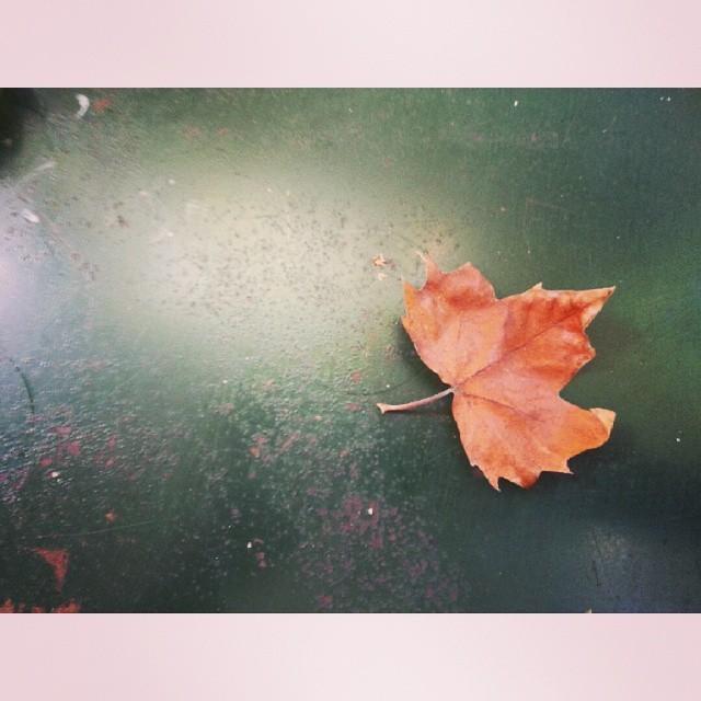 outono_03.jpg