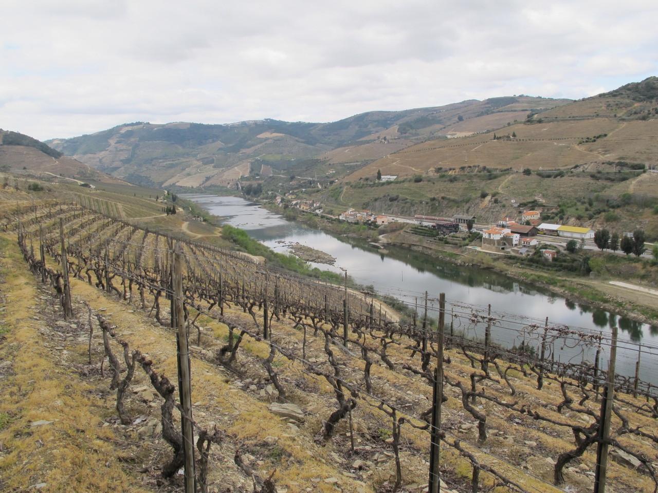 Quinta dos Aciprestes... ao longo do Douro