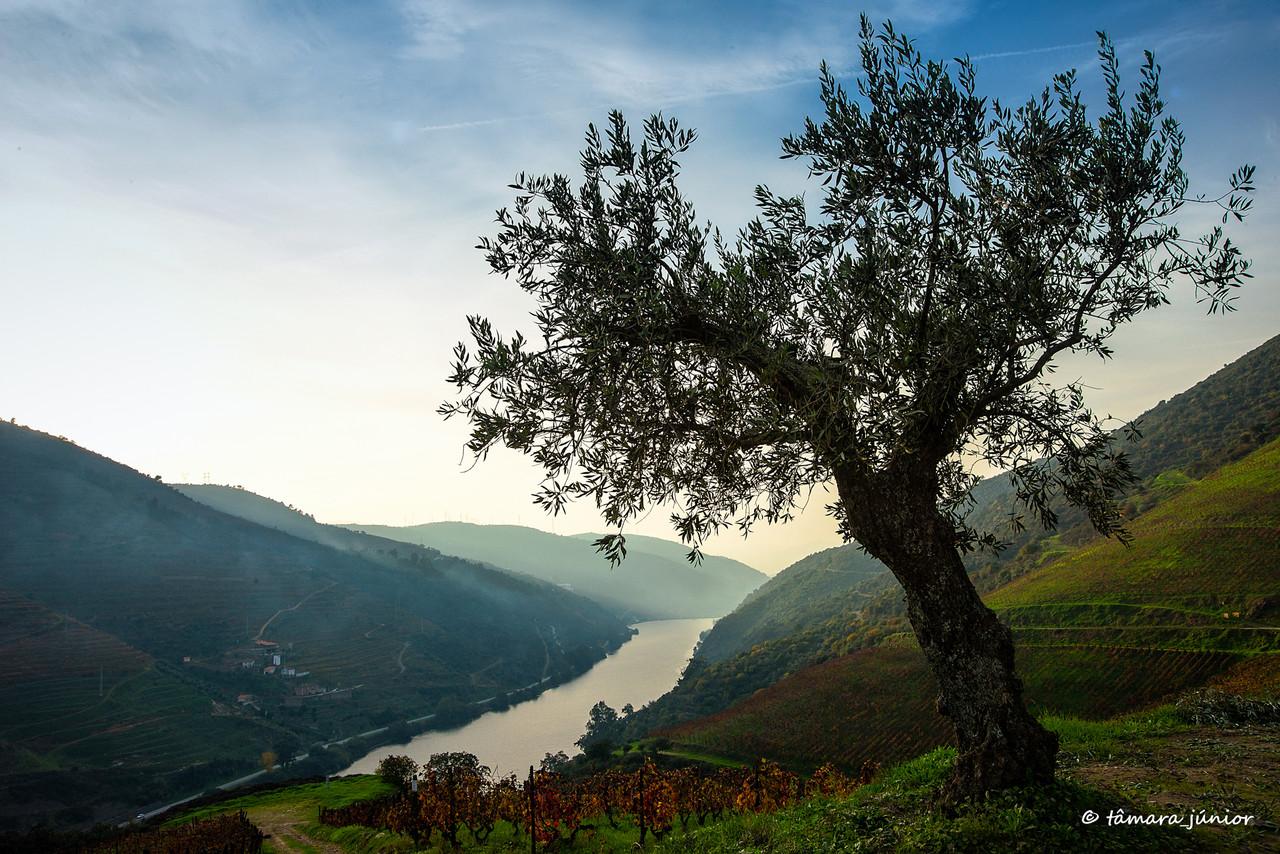2015 - Outono no Douro Vinhateiro IIII (447).jpg