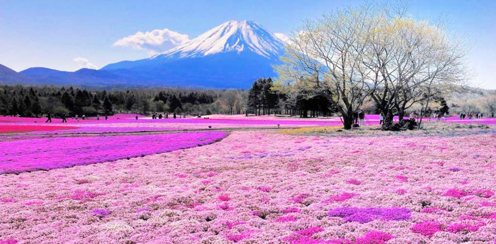 colorful_4.jpg