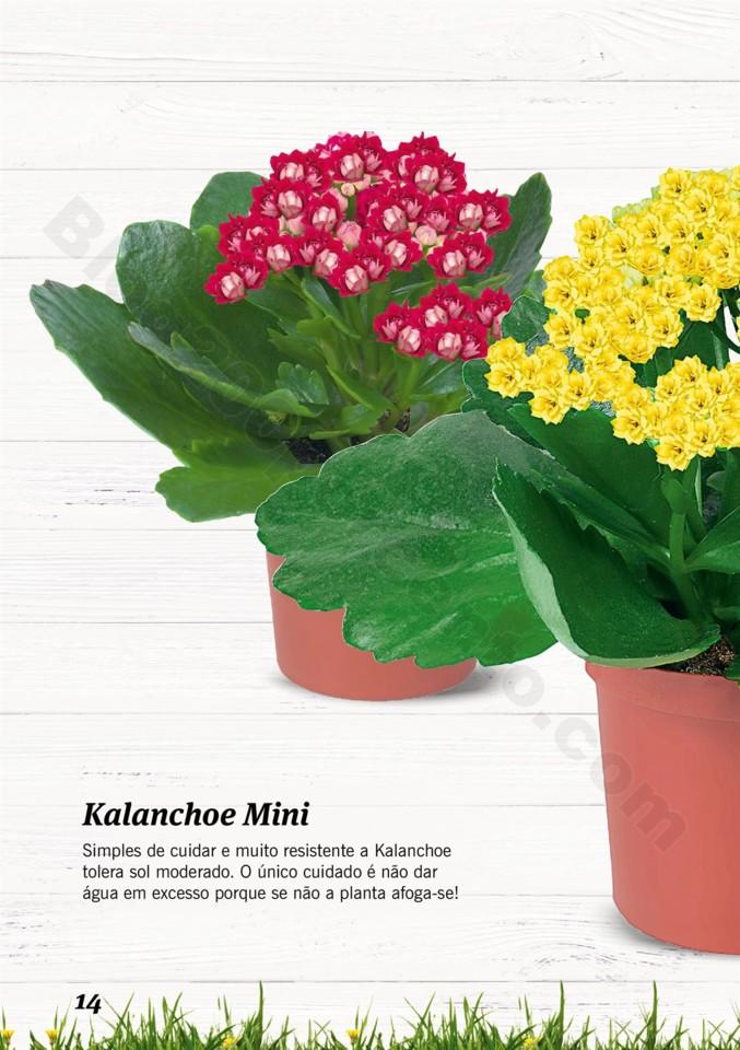 Mercado-de-Plantas-A-partir-de-04.04-01_013.jpg