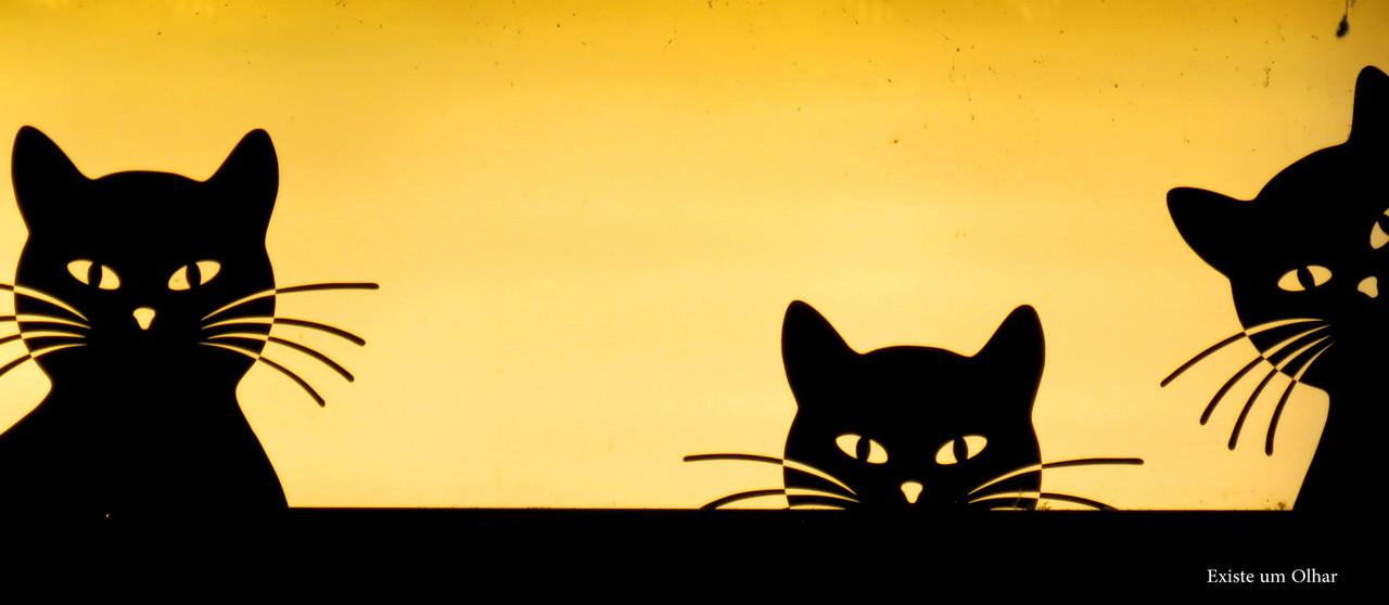 Três gatos à janela