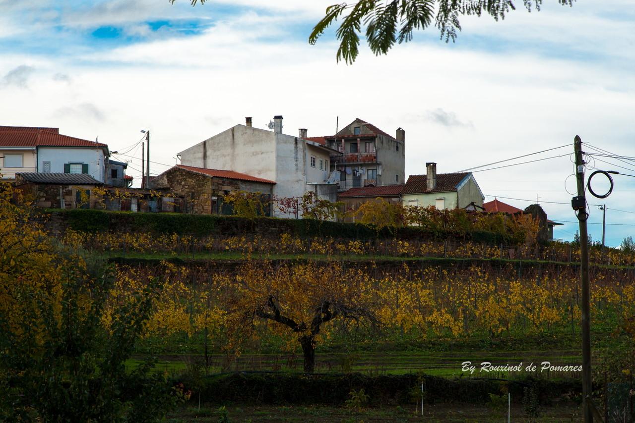 Outono em Murça (10).JPG