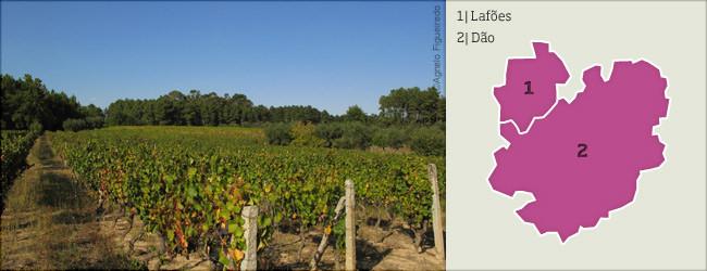 vinhos dao_lafoes.jpg