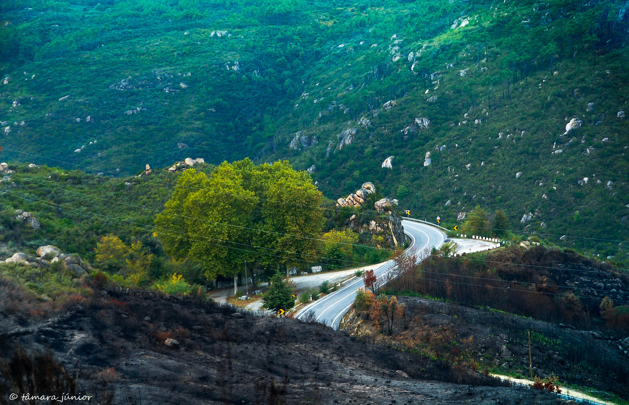 23.- 2010 - Caminhada Linha CP Vidago-Pedras [1º