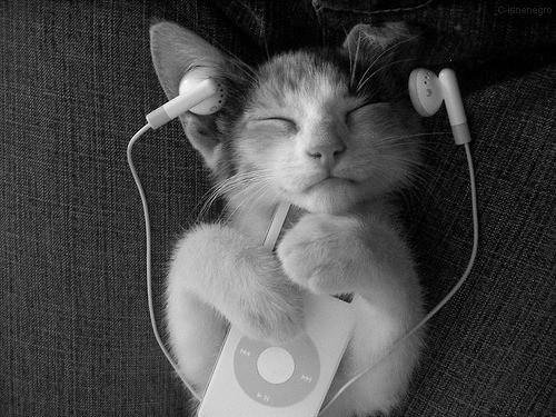 cat listen music.jpg