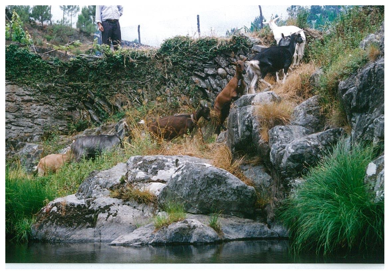 Cabras Aguincho.jpg