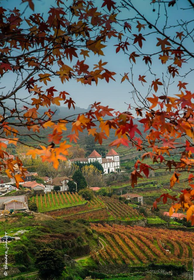 2015 - Outono no Douro Vinhateiro IIII (130).jpg