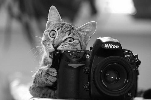 catphoto.jpg
