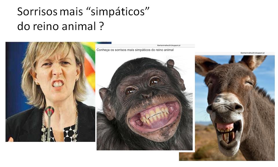 sorrisos no reino animal.png