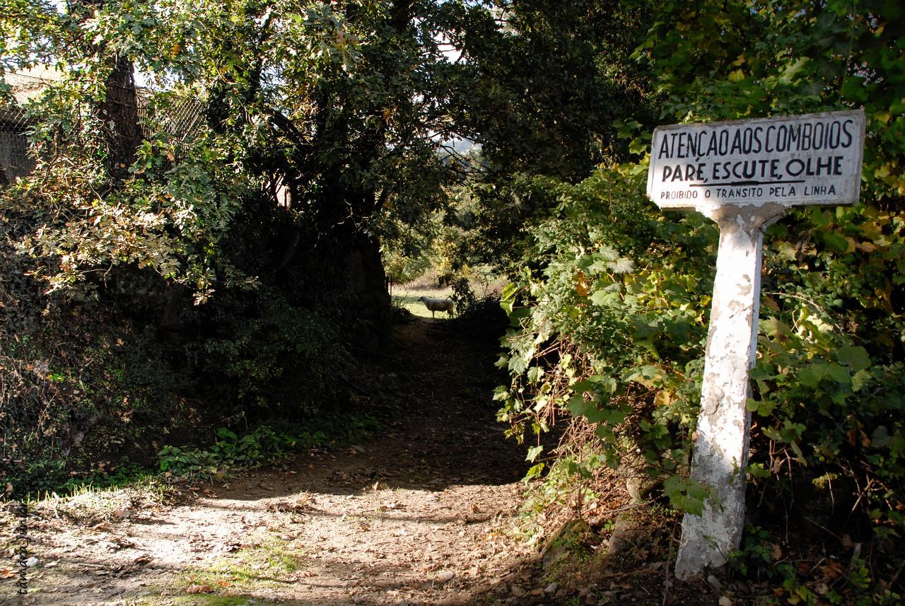 2010 - Caminhada limha CP Sabroso-Vila Pouca 093.j
