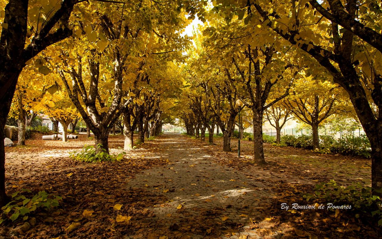 Outono em Pomares (14).JPG