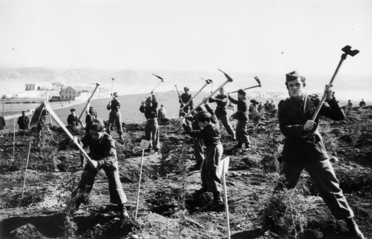 Mocidade Portuguesa plantando árvores, Serra de Monsanto (A.F.C.M.L., c. 1944)