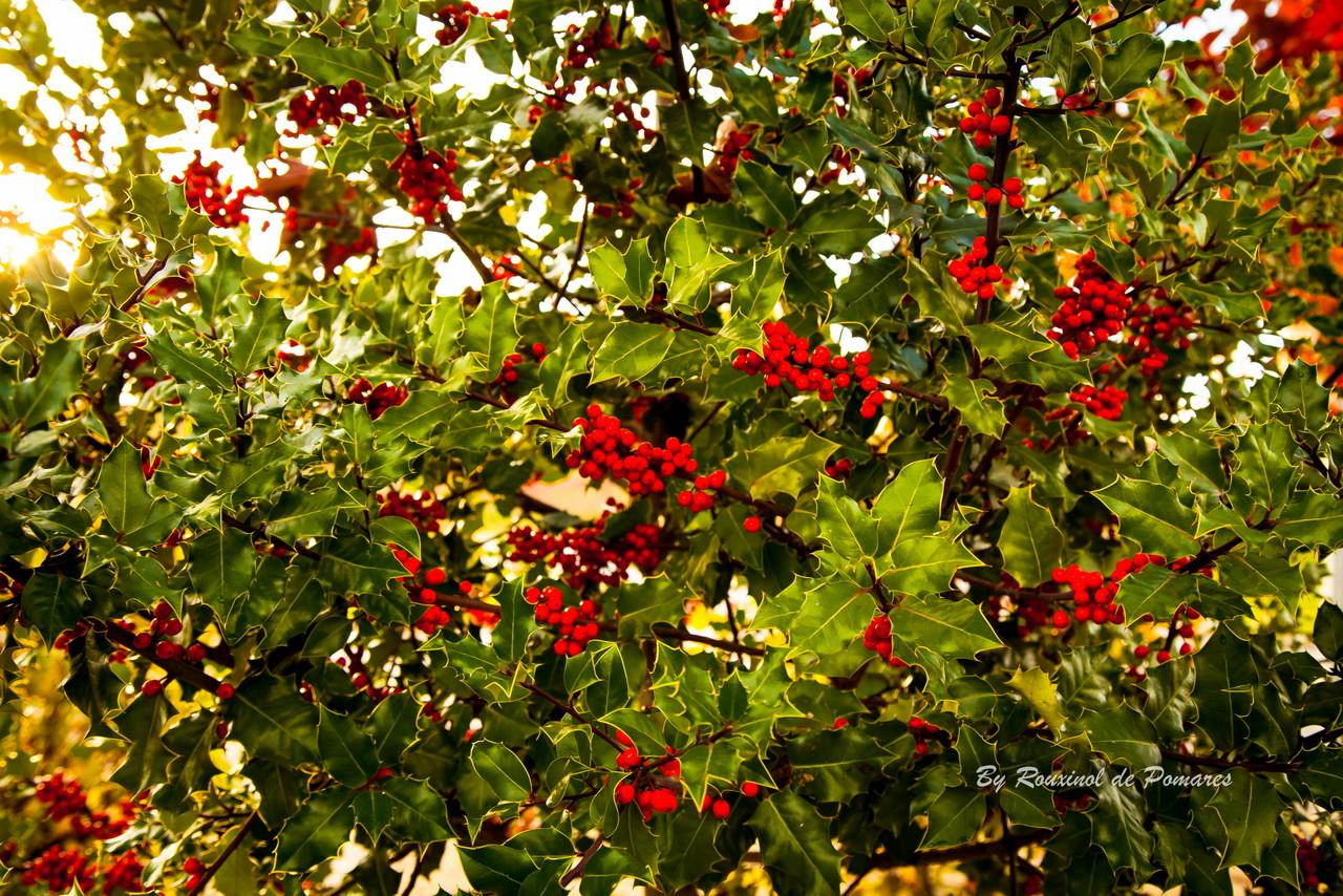 Outono em Murça (19).JPG