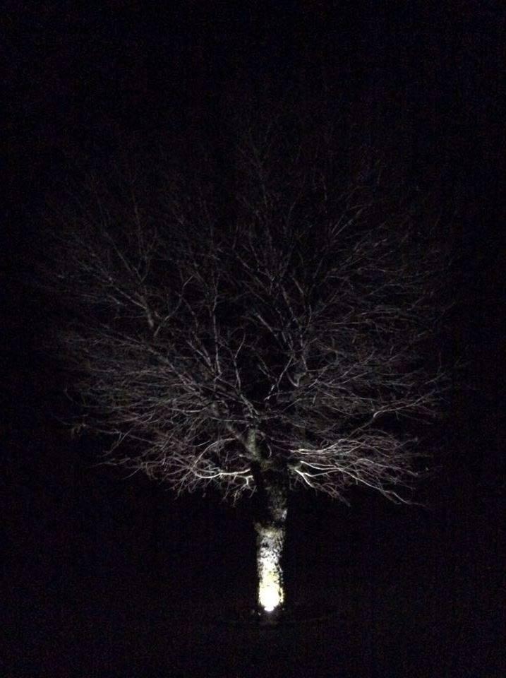 árvore.NelSilva2.jpg