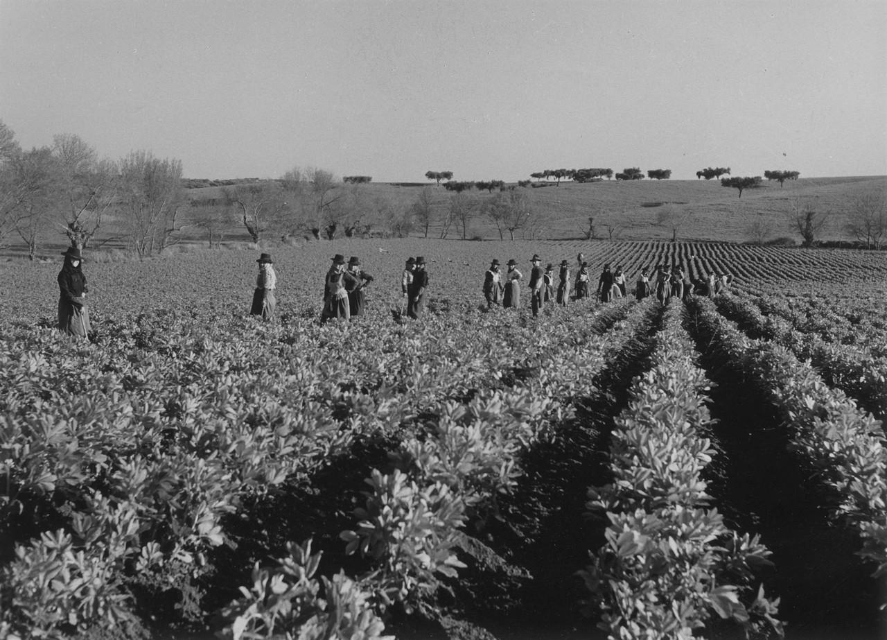 Trabalho rural, Portugal (A. Pastor, c. 1960)