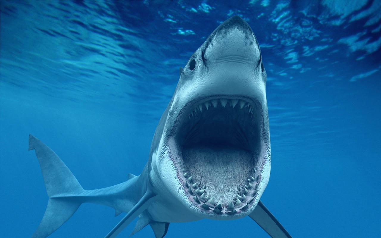 tubarões3.jpg