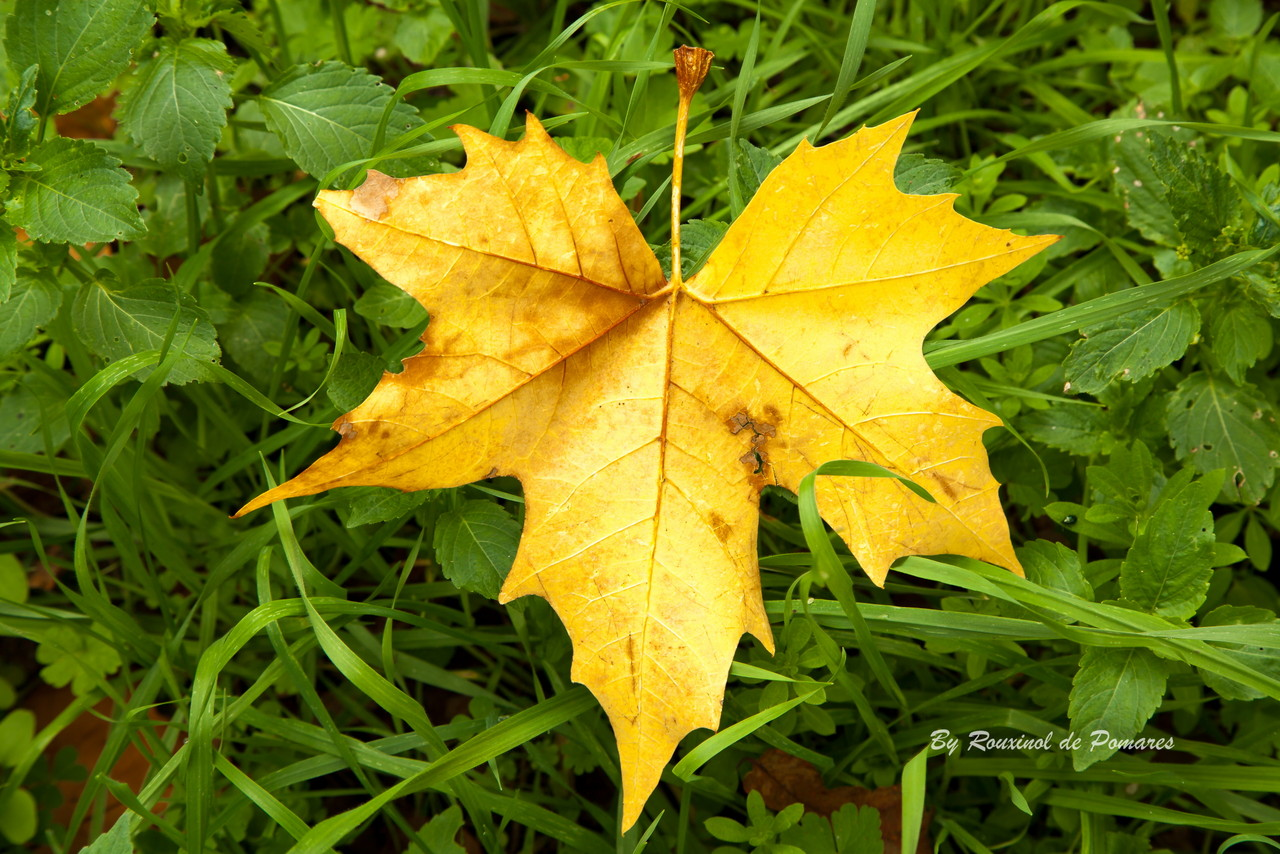 Outono em Pomares (15).JPG