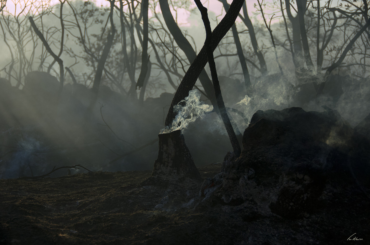 1600-incend-avelelas (302).jpg